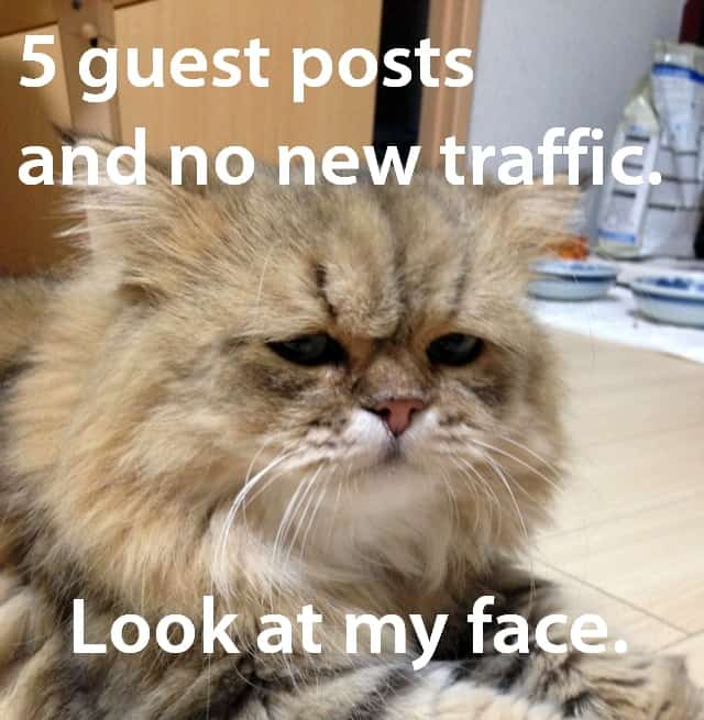 disappointed cat no traffic from guest post